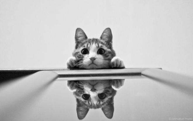 kitty reflection